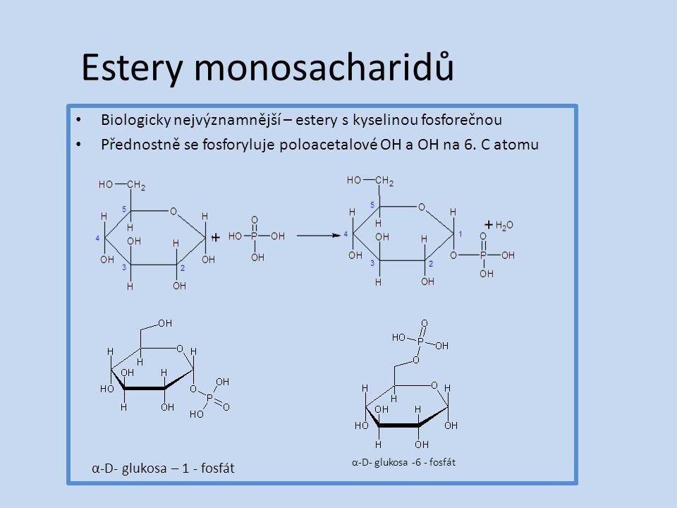 Estery monosacharidů Biologicky nejvýznamnější – estery s kyselinou fosforečnou Přednostně se fosforyluje poloacetalové OH a OH na 6.