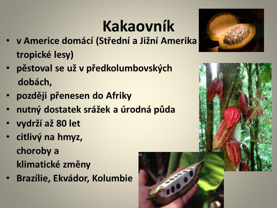 Kakaovník v Americe domácí (Střední a Jižní Amerika – tropické lesy) pěstoval se už v předkolumbovských dobách, později přenesen do Afriky nutný dostatek srážek a úrodná půda vydrží až 80 let citlivý na hmyz, choroby a klimatické změny Brazílie, Ekvádor, Kolumbie