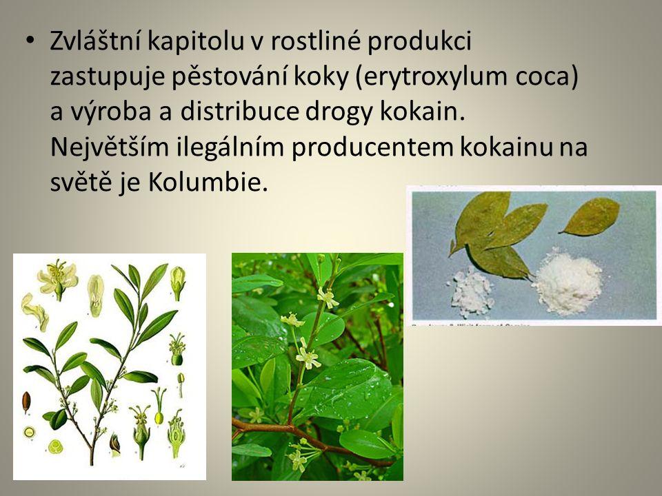 Zvláštní kapitolu v rostliné produkci zastupuje pěstování koky (erytroxylum coca) a výroba a distribuce drogy kokain. Největším ilegálním producentem
