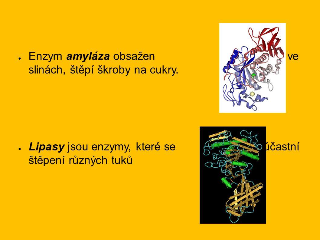 ● Enzym amyláza obsažen ve slinách, štěpí škroby na cukry. ● Lipasy jsou enzymy, které se účastní štěpení různých tuků