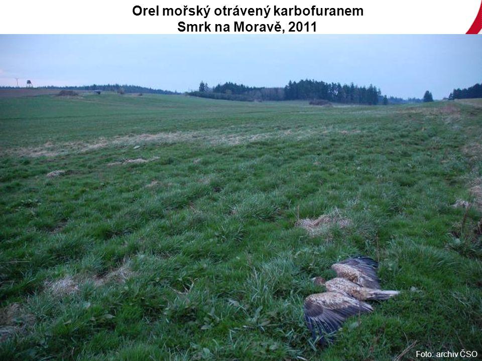 Foto: archiv ČSO Orel mořský otrávený karbofuranem Smrk na Moravě, 2011