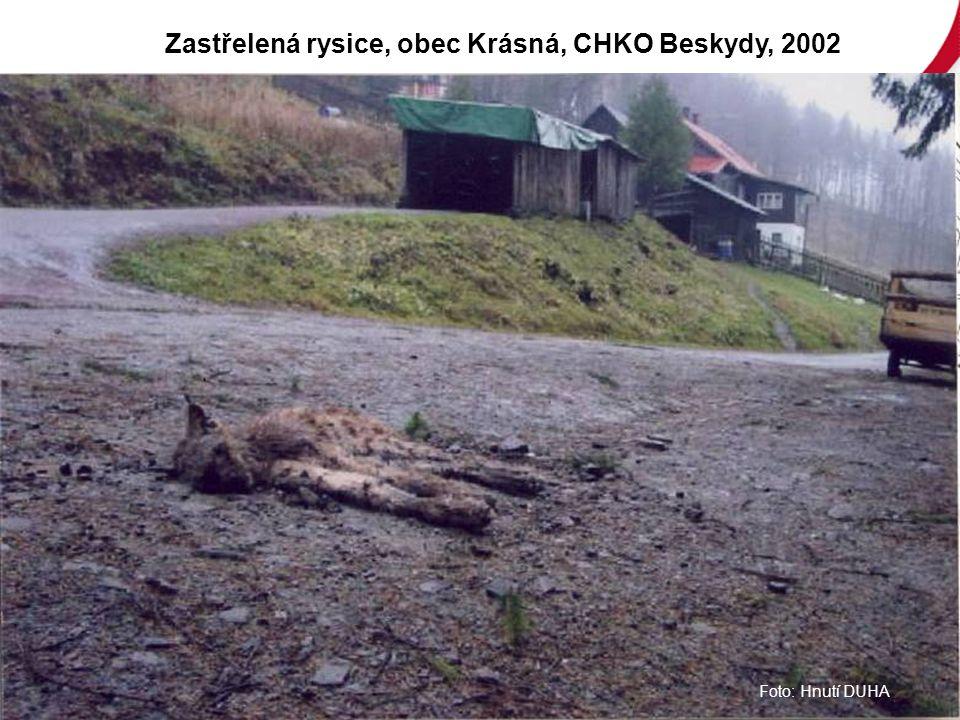 Foto: Hnutí DUHA Zastřelená rysice, obec Krásná, CHKO Beskydy, 2002