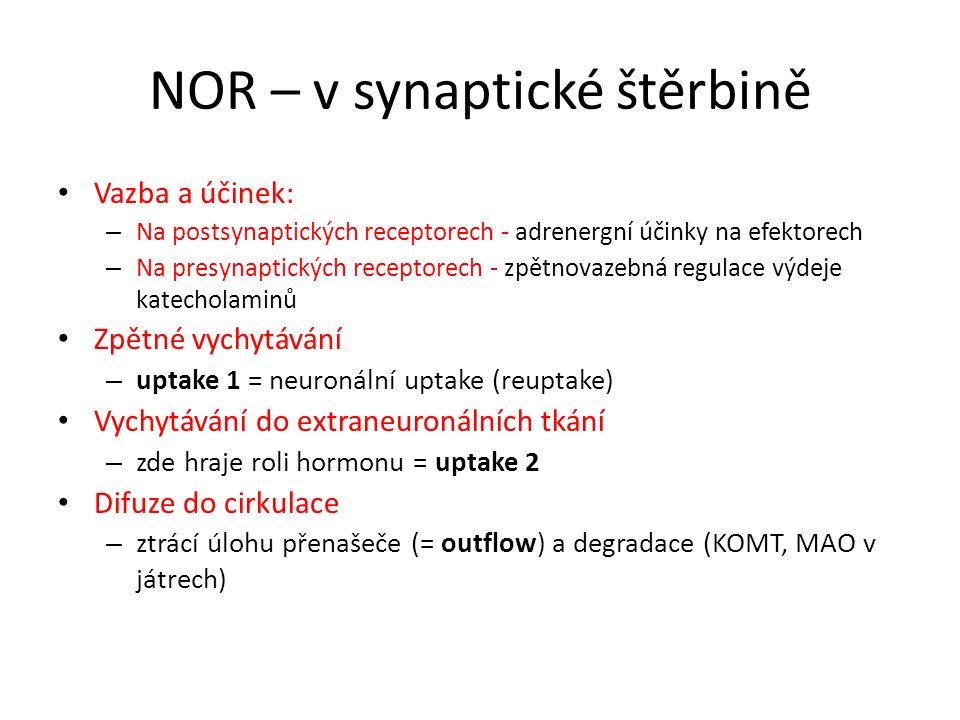 NOR – v synaptické štěrbině Vazba a účinek: – Na postsynaptických receptorech - adrenergní účinky na efektorech – Na presynaptických receptorech - zpě