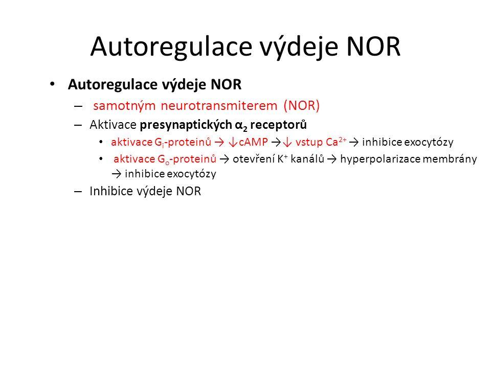 Autoregulace výdeje NOR – samotným neurotransmiterem (NOR) – Aktivace presynaptických α 2 receptorů aktivace G i -proteinů → ↓cAMP →↓ vstup Ca 2+ → in
