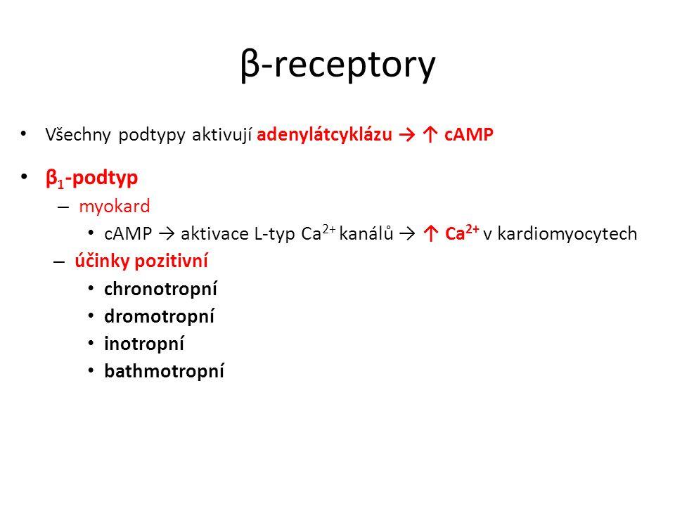 β-receptory Všechny podtypy aktivují adenylátcyklázu → ↑ cAMP β 1 -podtyp – myokard cAMP → aktivace L-typ Ca 2+ kanálů → ↑ Ca 2+ v kardiomyocytech – ú