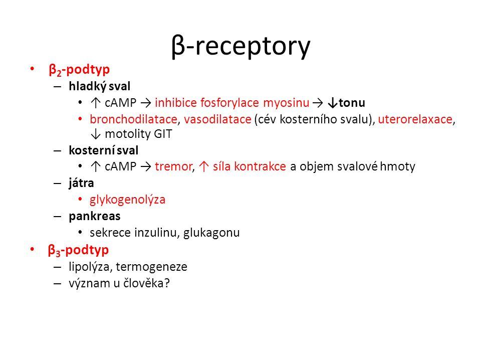 β-receptory β 2 -podtyp – hladký sval ↑ cAMP → inhibice fosforylace myosinu → ↓tonu bronchodilatace, vasodilatace (cév kosterního svalu), uterorelaxac