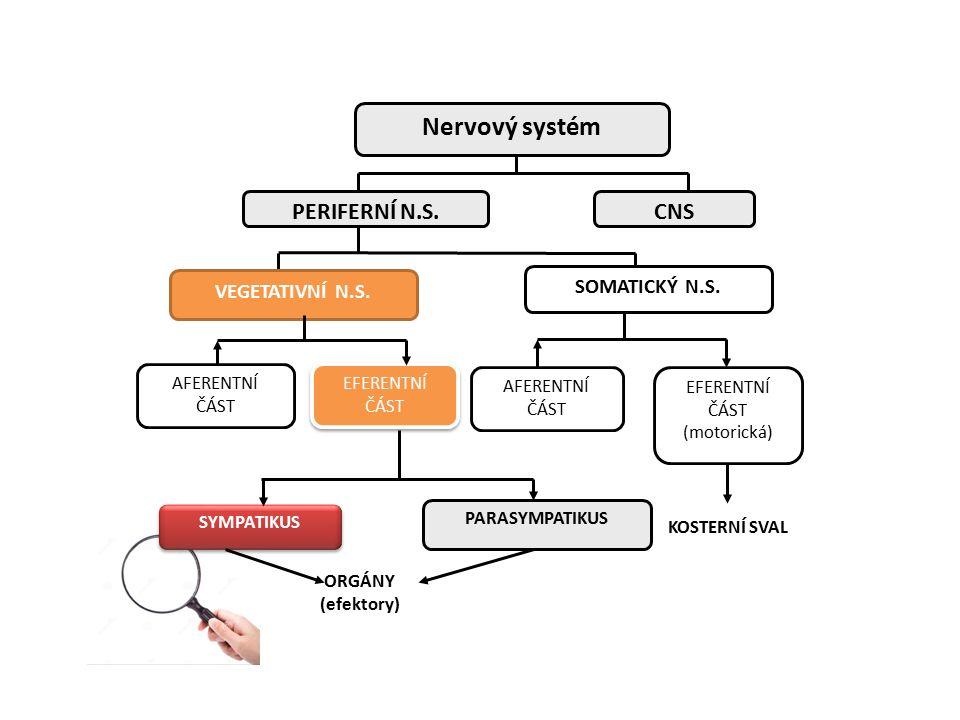 NOR – v synaptické štěrbině Vazba a účinek: – Na postsynaptických receptorech - adrenergní účinky na efektorech – Na presynaptických receptorech - zpětnovazebná regulace výdeje katecholaminů Zpětné vychytávání – uptake 1 = neuronální uptake (reuptake) Vychytávání do extraneuronálních tkání – zde hraje roli hormonu = uptake 2 Difuze do cirkulace – ztrácí úlohu přenašeče (= outflow) a degradace (KOMT, MAO v játrech)