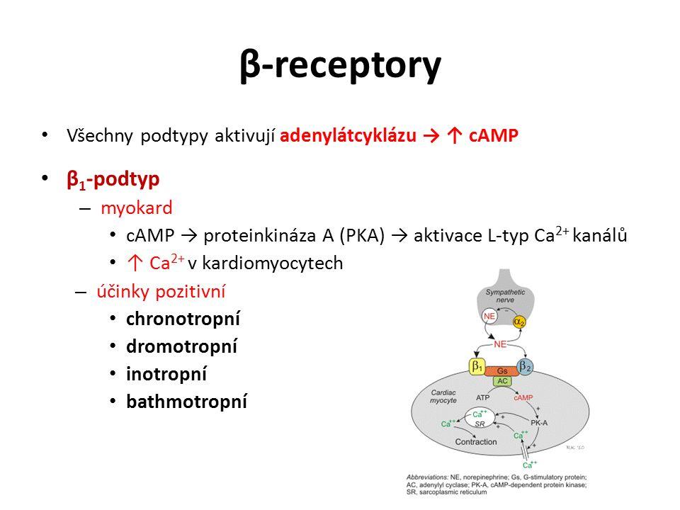 β-receptory Všechny podtypy aktivují adenylátcyklázu → ↑ cAMP β 1 -podtyp – myokard cAMP → proteinkináza A (PKA) → aktivace L-typ Ca 2+ kanálů ↑ Ca 2+ v kardiomyocytech – účinky pozitivní chronotropní dromotropní inotropní bathmotropní