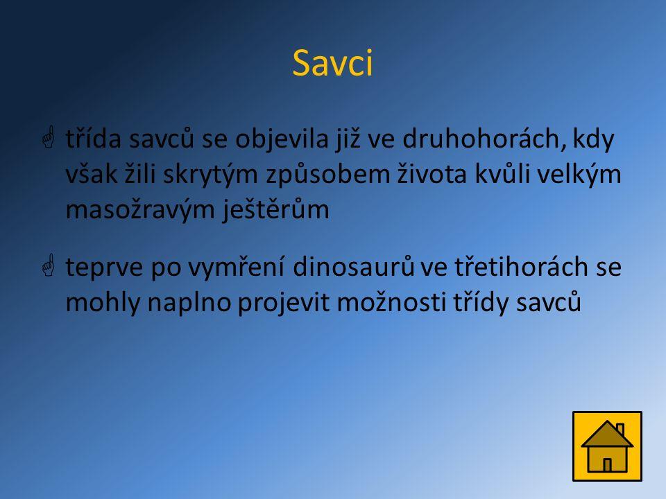 Savci  třída savců se objevila již ve druhohorách, kdy však žili skrytým způsobem života kvůli velkým masožravým ještěrům  teprve po vymření dinosaurů ve třetihorách se mohly naplno projevit možnosti třídy savců