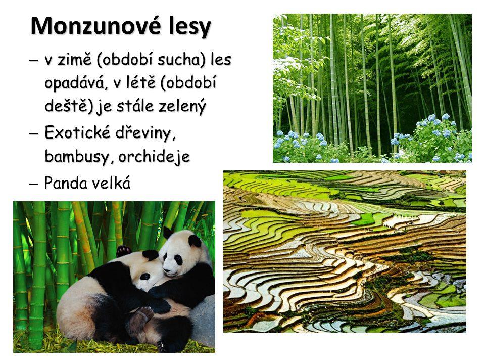 Monzunové lesy – v zimě (období sucha) les opadává, v létě (období deště) je stále zelený – Exotické dřeviny, bambusy, orchideje – Panda velká
