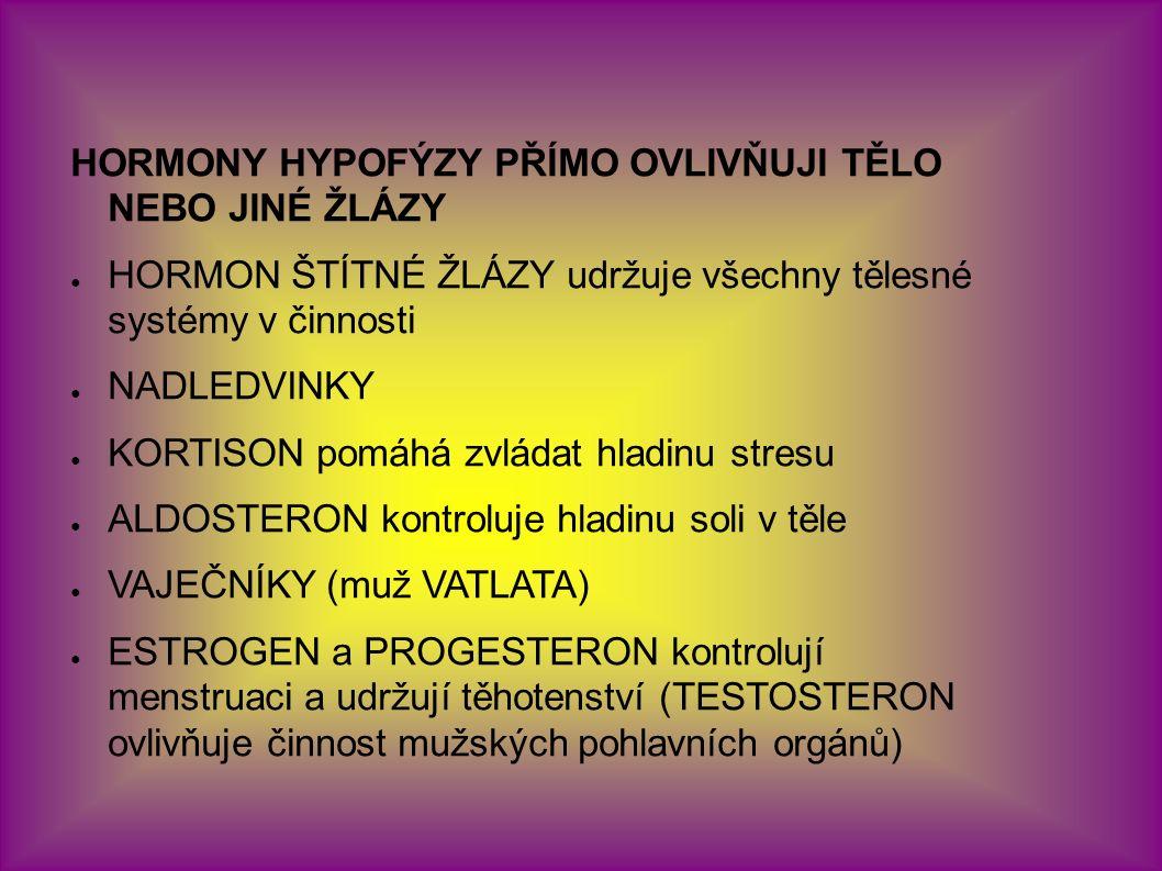 HORMONY HYPOFÝZY PŘÍMO OVLIVŇUJI TĚLO NEBO JINÉ ŽLÁZY ● HORMON ŠTÍTNÉ ŽLÁZY udržuje všechny tělesné systémy v činnosti ● NADLEDVINKY ● KORTISON pomáhá