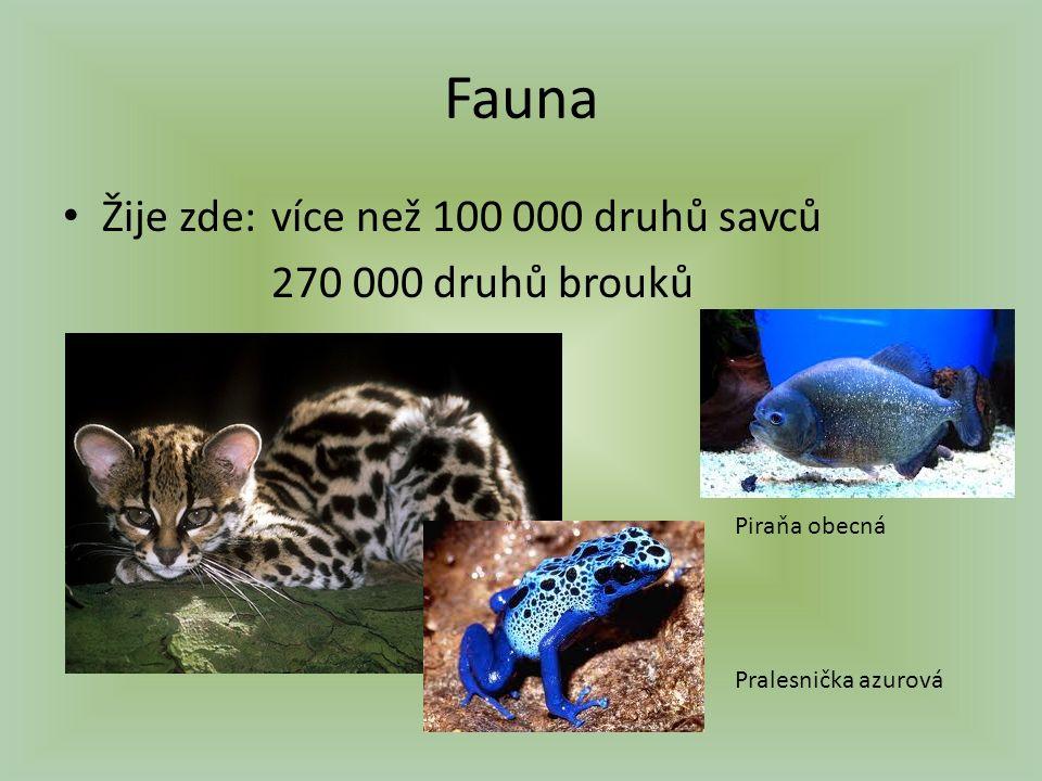 Fauna Žije zde:více než 100 000 druhů savců 270 000 druhů brouků Piraňa obecná Pralesnička azurová