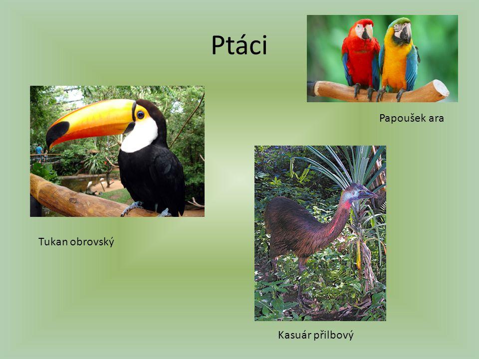 Ptáci Papoušek ara Tukan obrovský Kasuár přilbový