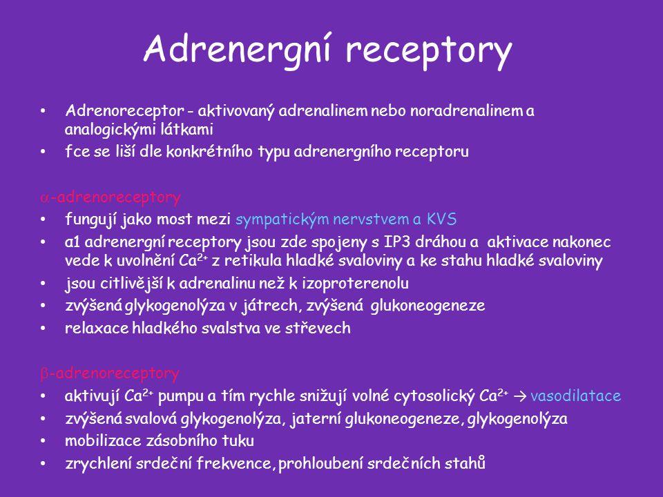 Adrenergní receptory Adrenoreceptor - aktivovaný adrenalinem nebo noradrenalinem a analogickými látkami fce se liší dle konkrétního typu adrenergního receptoru  -adrenoreceptory fungují jako most mezi sympatickým nervstvem a KVS α1 adrenergní receptory jsou zde spojeny s IP3 dráhou a aktivace nakonec vede k uvolnění Ca 2+ z retikula hladké svaloviny a ke stahu hladké svaloviny jsou citlivější k adrenalinu než k izoproterenolu zvýšená glykogenolýza v játrech, zvýšená glukoneogeneze relaxace hladkého svalstva ve střevech  -adrenoreceptory aktivují Ca 2+ pumpu a tím rychle snižují volné cytosolický Ca 2+ → vasodilatace zvýšená svalová glykogenolýza, jaterní glukoneogeneze, glykogenolýza mobilizace zásobního tuku zrychlení srdeční frekvence, prohloubení srdečních stahů