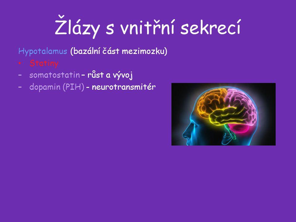 Žlázy s vnitřní sekrecí Hypotalamus (bazální část mezimozku) Statiny –somatostatin – růst a vývoj –dopamin (PIH) - neurotransmitér