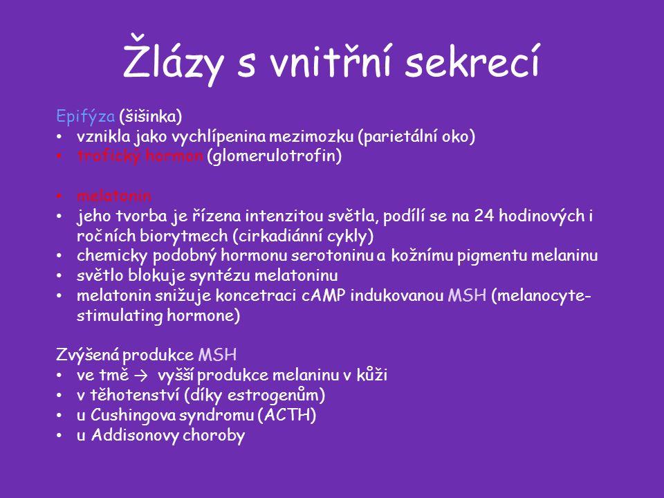 Žlázy s vnitřní sekrecí Epifýza (šišinka) vznikla jako vychlípenina mezimozku (parietální oko) trofický hormon (glomerulotrofin) melatonin jeho tvorba je řízena intenzitou světla, podílí se na 24 hodinových i ročních biorytmech (cirkadiánní cykly) chemicky podobný hormonu serotoninu a kožnímu pigmentu melaninu světlo blokuje syntézu melatoninu melatonin snižuje koncetraci cAMP indukovanou MSH (melanocyte- stimulating hormone) Zvýšená produkce MSH ve tmě → vyšší produkce melaninu v kůži v těhotenství (díky estrogenům) u Cushingova syndromu (ACTH) u Addisonovy choroby
