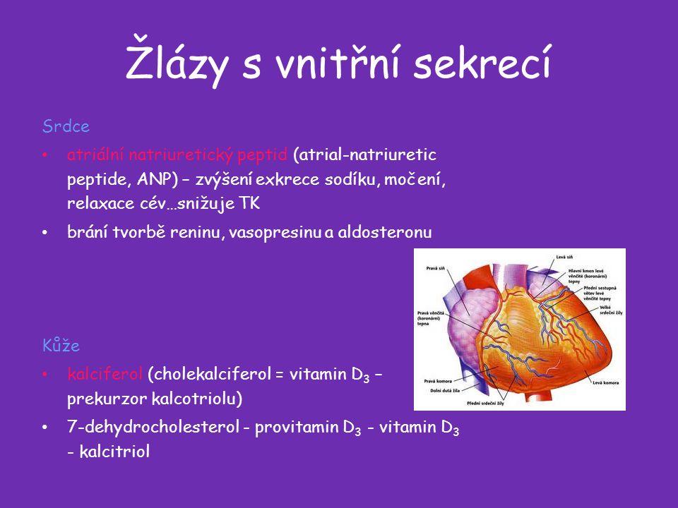 Žlázy s vnitřní sekrecí Srdce atriální natriuretický peptid (atrial-natriuretic peptide, ANP) – zvýšení exkrece sodíku, močení, relaxace cév…snižuje TK brání tvorbě reninu, vasopresinu a aldosteronu Kůže kalciferol (cholekalciferol = vitamin D 3 – prekurzor kalcotriolu) 7-dehydrocholesterol - provitamin D 3 - vitamin D 3 - kalcitriol