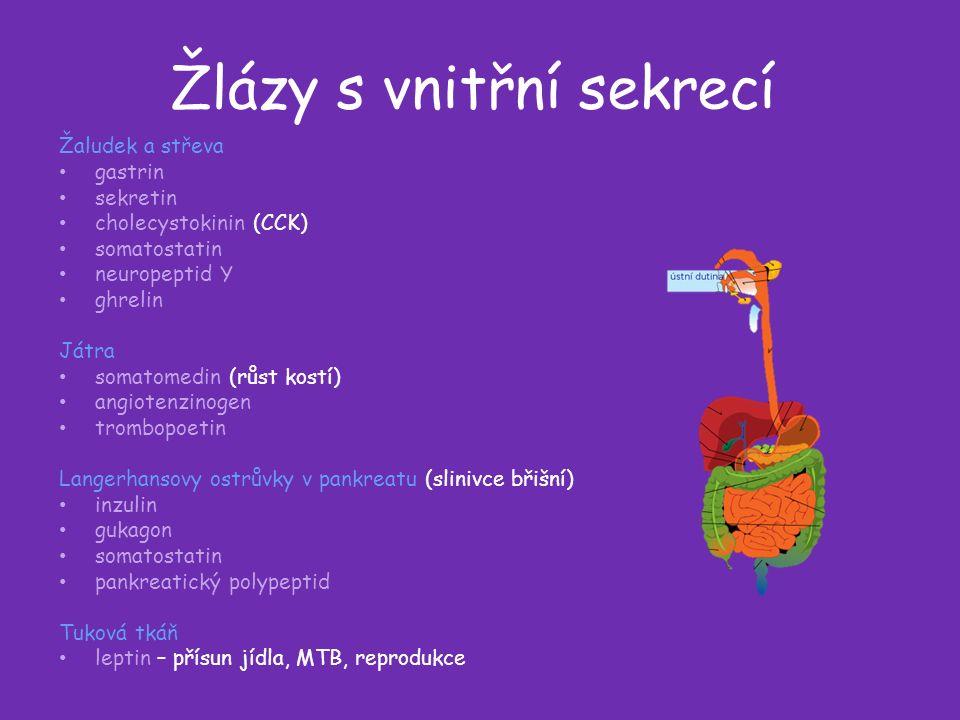 Žlázy s vnitřní sekrecí Žaludek a střeva gastrin sekretin cholecystokinin (CCK) somatostatin neuropeptid Y ghrelin Játra somatomedin (růst kostí) angiotenzinogen trombopoetin Langerhansovy ostrůvky v pankreatu (slinivce břišní) inzulin gukagon somatostatin pankreatický polypeptid Tuková tkáň leptin – přísun jídla, MTB, reprodukce