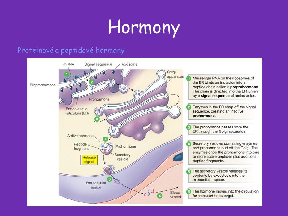 Hormony Proteinové a peptidové hormony