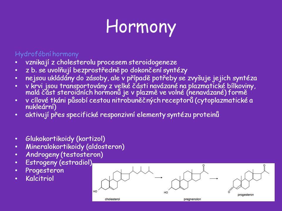 Hormony Hydrofóbní hormony vznikají z cholesterolu procesem steroidogeneze z b.