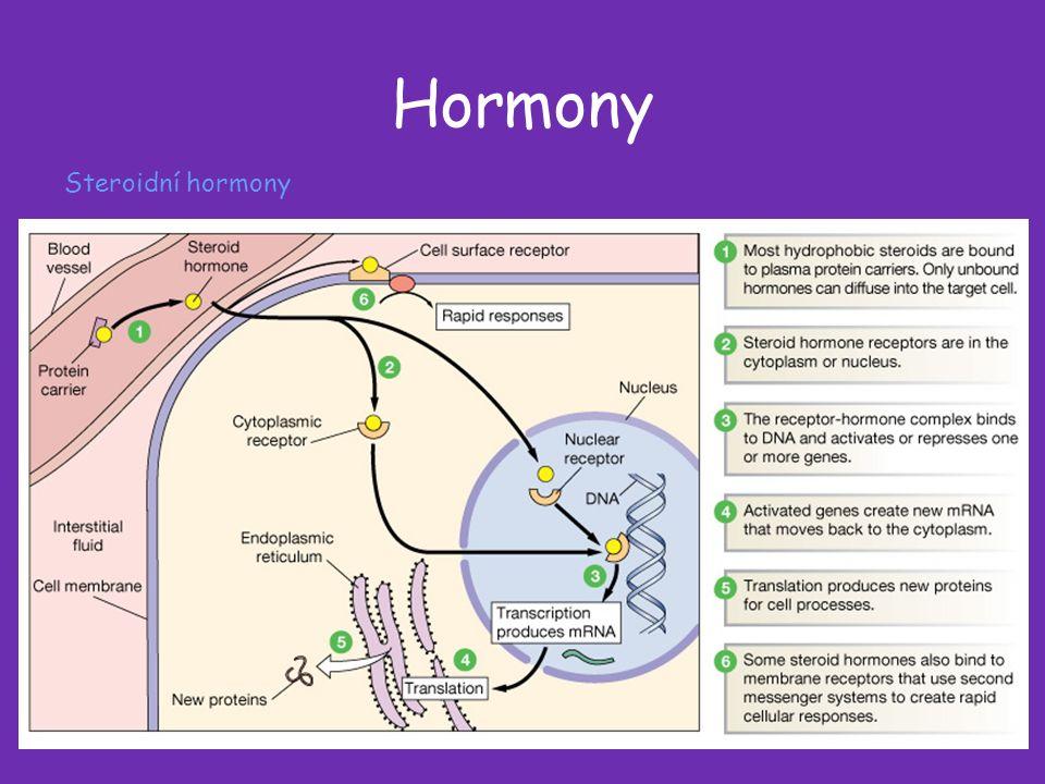 Hormony Steroidní hormony