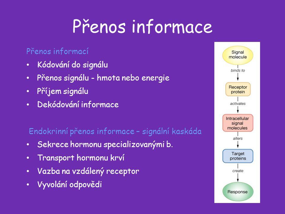 Přenos informace Přenos informací Kódování do signálu Přenos signálu - hmota nebo energie Příjem signálu Dekódování informace Endokrinní přenos informace – signální kaskáda Sekrece hormonu specializovanými b.