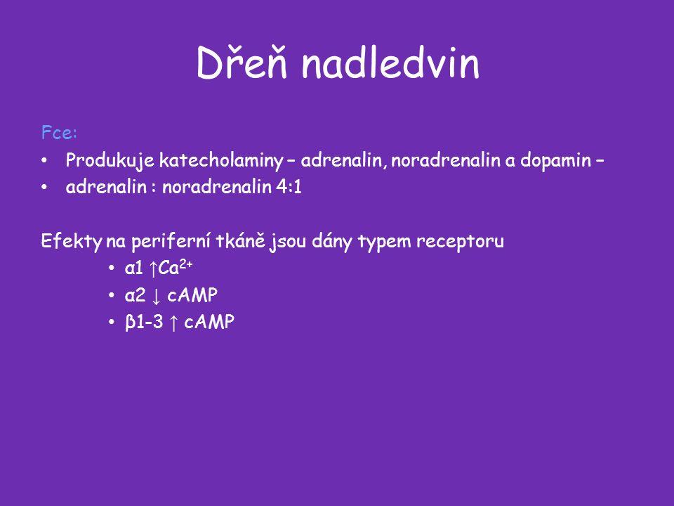 Dřeň nadledvin Fce: Produkuje katecholaminy – adrenalin, noradrenalin a dopamin – adrenalin : noradrenalin 4:1 Efekty na periferní tkáně jsou dány typem receptoru α1 ↑ Ca 2+ α2 ↓ cAMP β1-3 ↑ cAMP