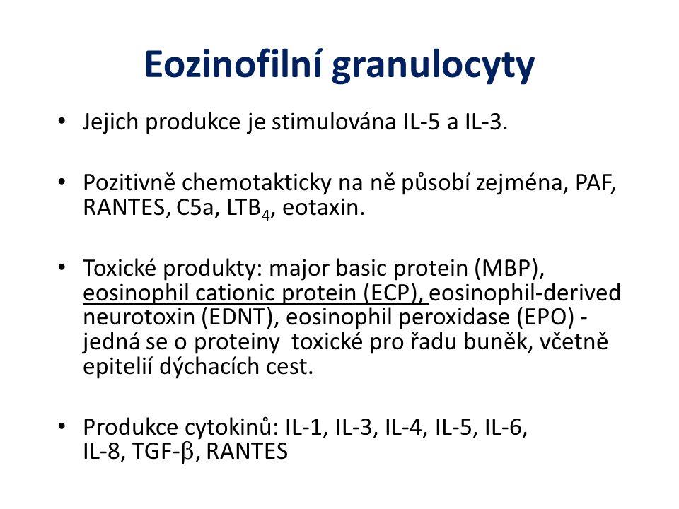 Eozinofilní granulocyty Jejich produkce je stimulována IL-5 a IL-3.