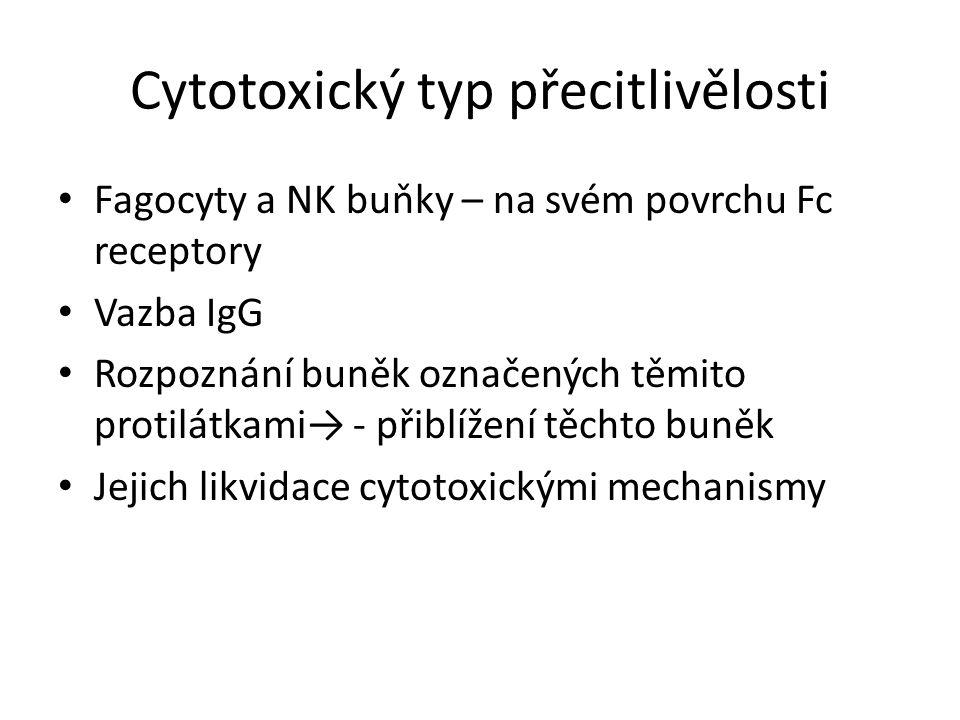 Cytotoxický typ přecitlivělosti Fagocyty a NK buňky – na svém povrchu Fc receptory Vazba IgG Rozpoznání buněk označených těmito protilátkami→ - přiblížení těchto buněk Jejich likvidace cytotoxickými mechanismy