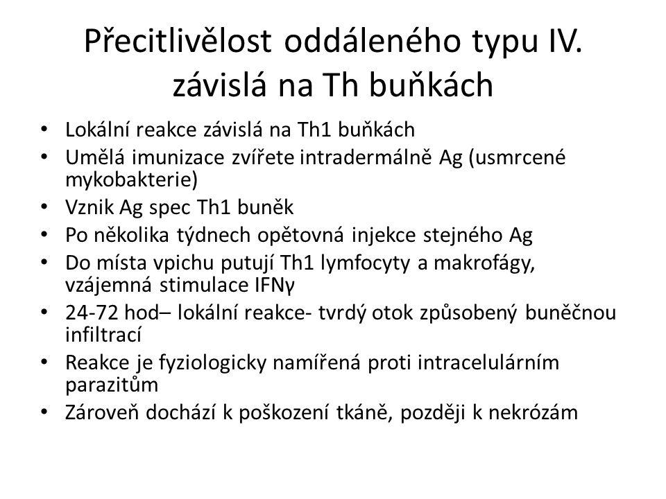 Přecitlivělost oddáleného typu IV.