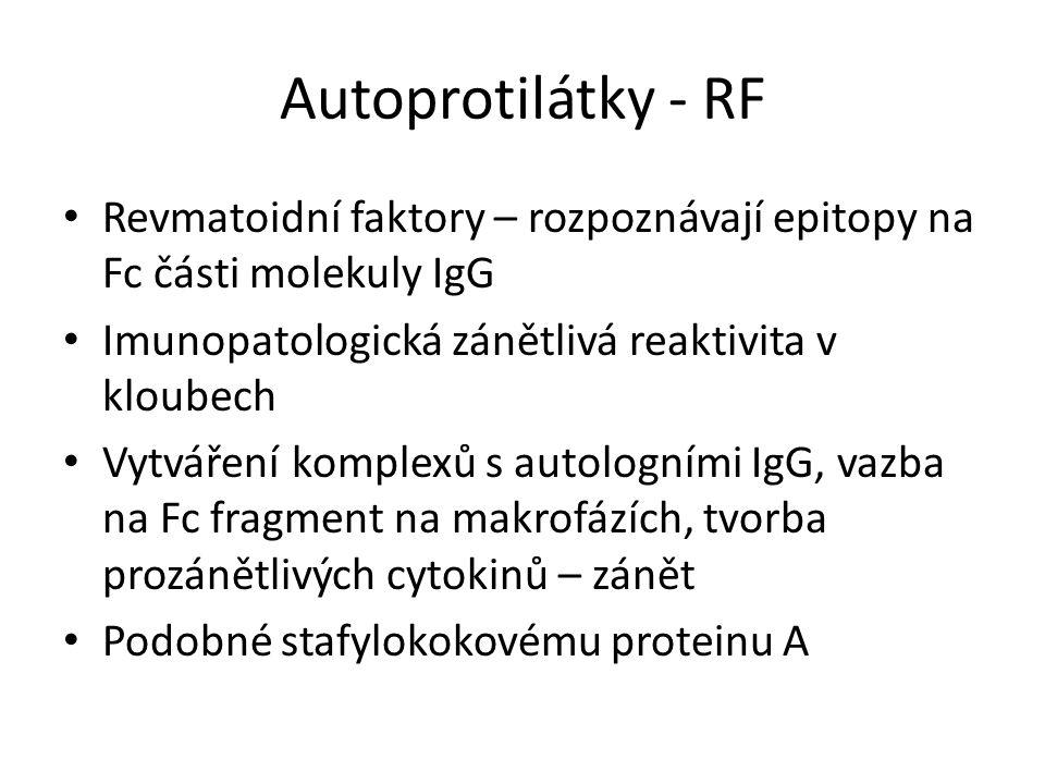 Autoprotilátky - RF Revmatoidní faktory – rozpoznávají epitopy na Fc části molekuly IgG Imunopatologická zánětlivá reaktivita v kloubech Vytváření komplexů s autologními IgG, vazba na Fc fragment na makrofázích, tvorba prozánětlivých cytokinů – zánět Podobné stafylokokovému proteinu A