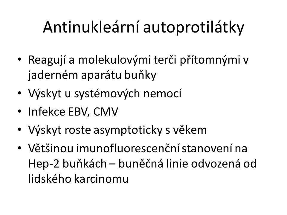 Antinukleární autoprotilátky Reagují a molekulovými terči přítomnými v jaderném aparátu buňky Výskyt u systémových nemocí Infekce EBV, CMV Výskyt roste asymptoticky s věkem Většinou imunofluorescenční stanovení na Hep-2 buňkách – buněčná linie odvozená od lidského karcinomu