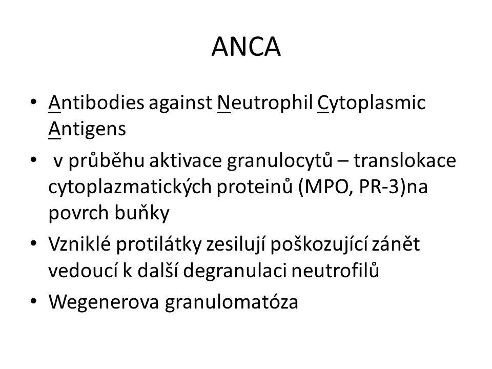 ANCA Antibodies against Neutrophil Cytoplasmic Antigens v průběhu aktivace granulocytů – translokace cytoplazmatických proteinů (MPO, PR-3)na povrch buňky Vzniklé protilátky zesilují poškozující zánět vedoucí k další degranulaci neutrofilů Wegenerova granulomatóza