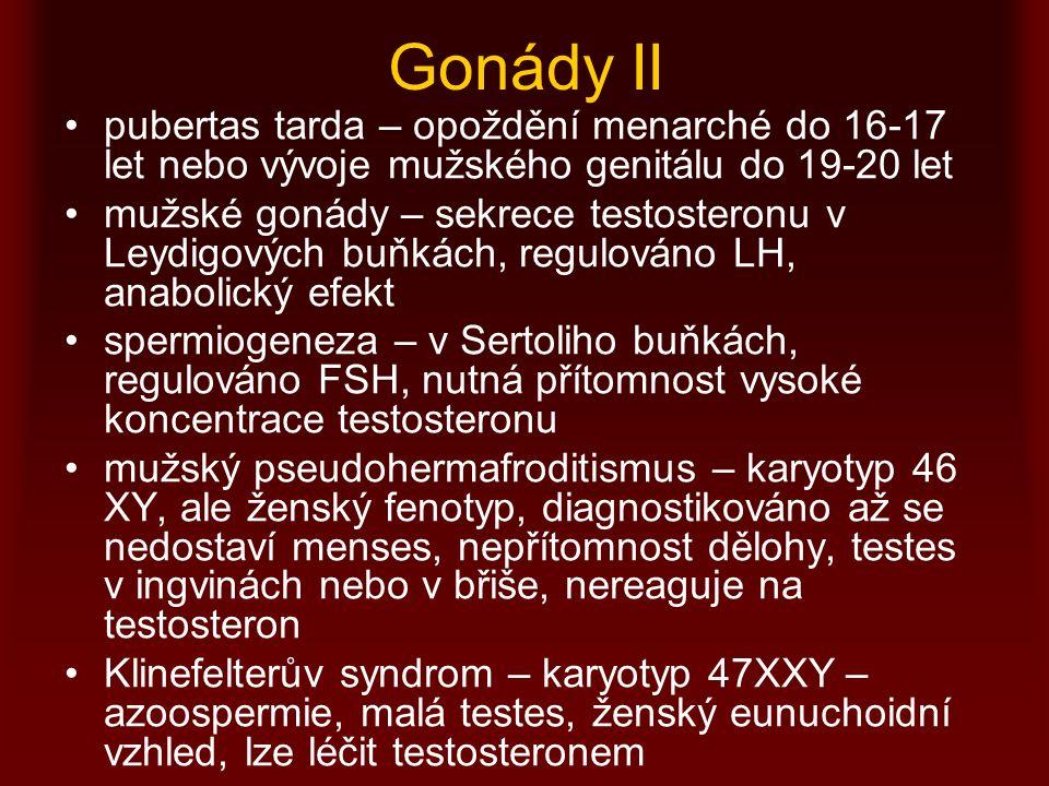 Gonády II pubertas tarda – opoždění menarché do 16-17 let nebo vývoje mužského genitálu do 19-20 let mužské gonády – sekrece testosteronu v Leydigových buňkách, regulováno LH, anabolický efekt spermiogeneza – v Sertoliho buňkách, regulováno FSH, nutná přítomnost vysoké koncentrace testosteronu mužský pseudohermafroditismus – karyotyp 46 XY, ale ženský fenotyp, diagnostikováno až se nedostaví menses, nepřítomnost dělohy, testes v ingvinách nebo v břiše, nereaguje na testosteron Klinefelterův syndrom – karyotyp 47XXY – azoospermie, malá testes, ženský eunuchoidní vzhled, lze léčit testosteronem