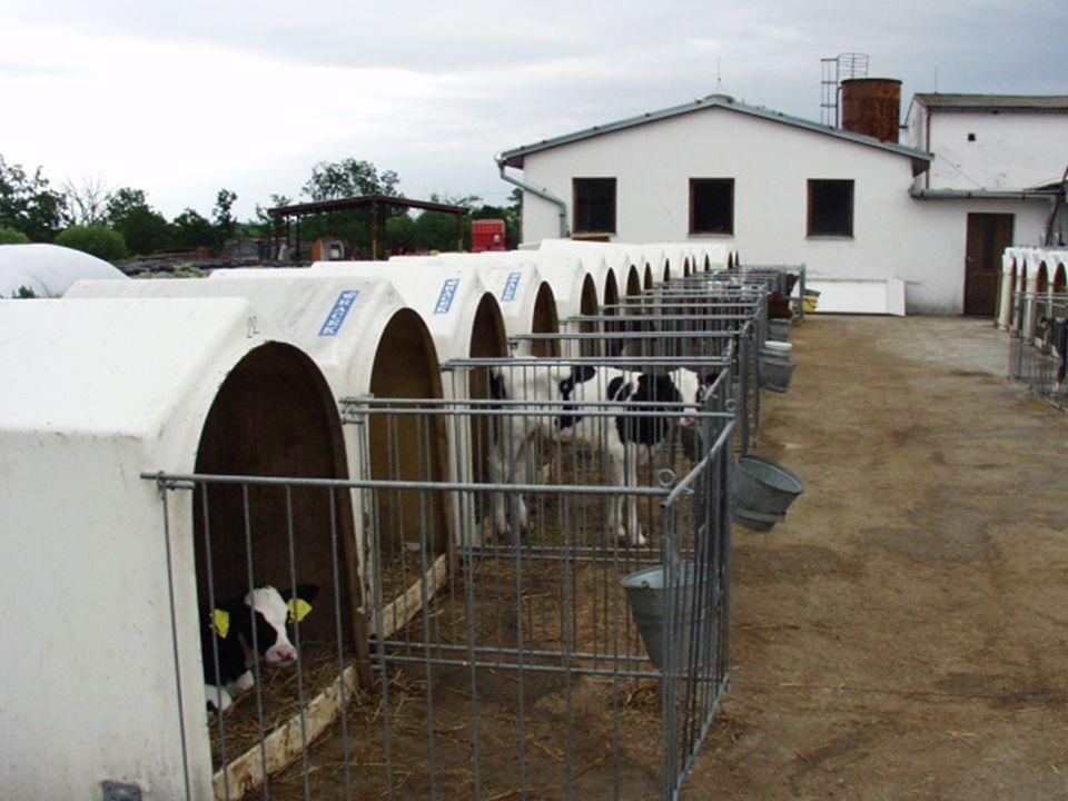 18 Přehled možných mléčných diet pro telata do odstavu mlezivo nezralé, později plnotučné mléko mléčné krmné směsi - MKS (laktosan, … ) ředění 1 : 9 u