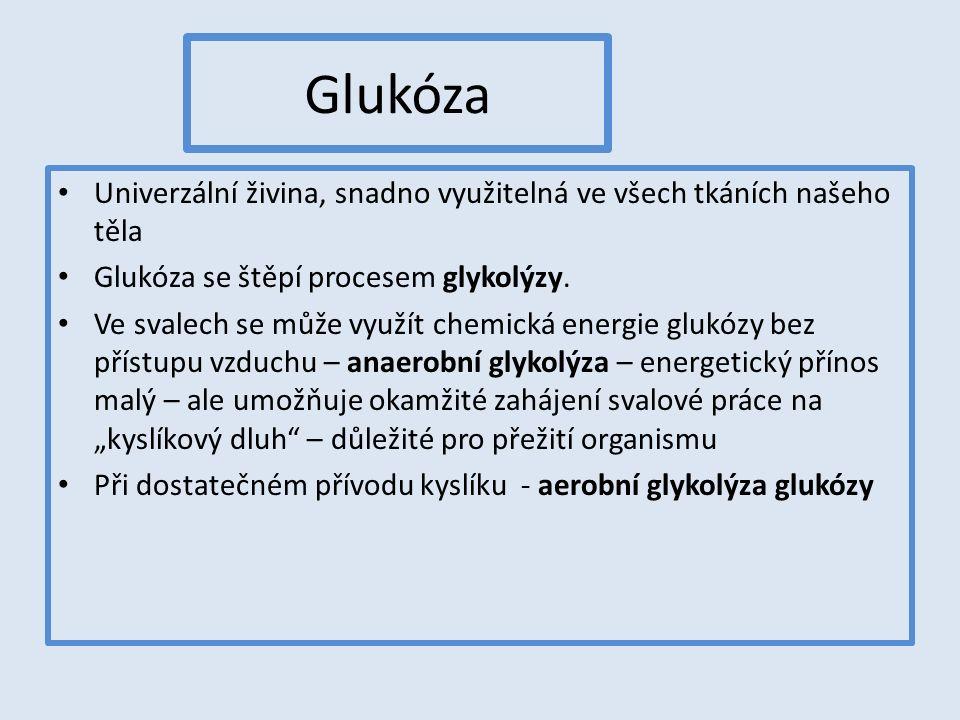 Glukóza Univerzální živina, snadno využitelná ve všech tkáních našeho těla Glukóza se štěpí procesem glykolýzy. Ve svalech se může využít chemická ene