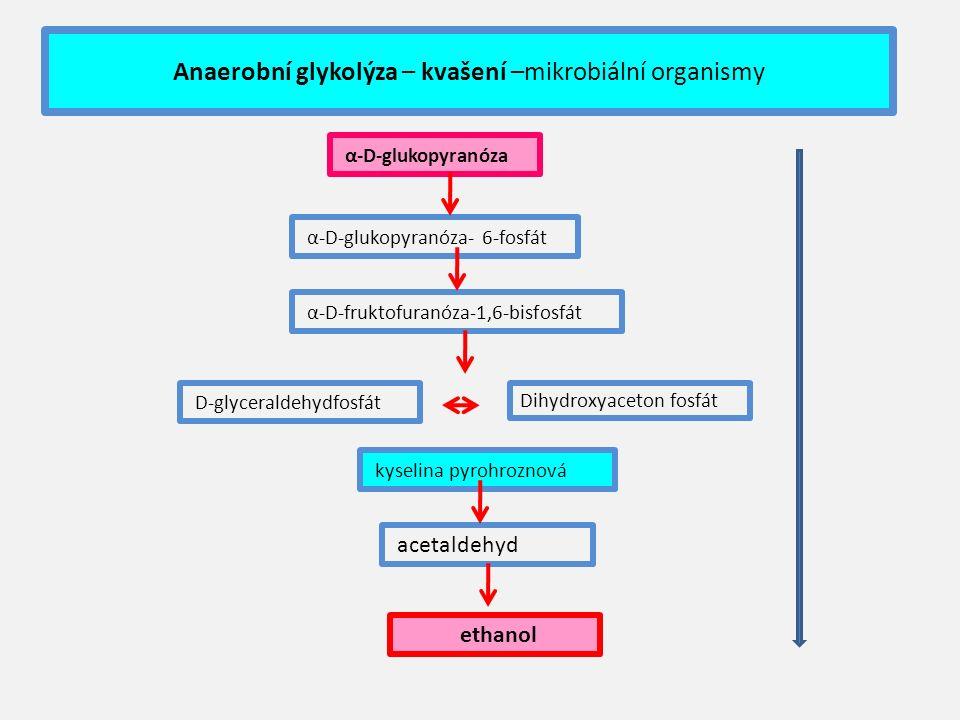 Anaerobní glykolýza – kvašení –mikrobiální organismy α-D-glukopyranóza α-D-glukopyranóza- 6-fosfát α-D-fruktofuranóza-1,6-bisfosfát D-glyceraldehydfosfát kyselina pyrohroznová acetaldehyd ethanol Dihydroxyaceton fosfát