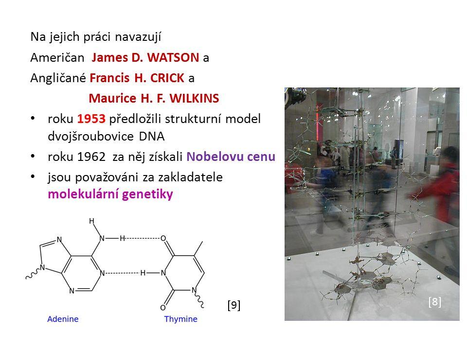 Na jejich práci navazují Američan James D. WATSON a Angličané Francis H. CRICK a Maurice H. F. WILKINS roku 1953 předložili strukturní model dvojšroub