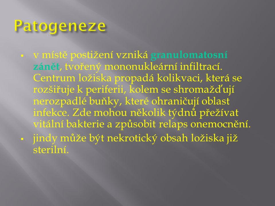  v místě postižení vzniká granulomatosní zánět, tvořený mononukleární infiltrací.