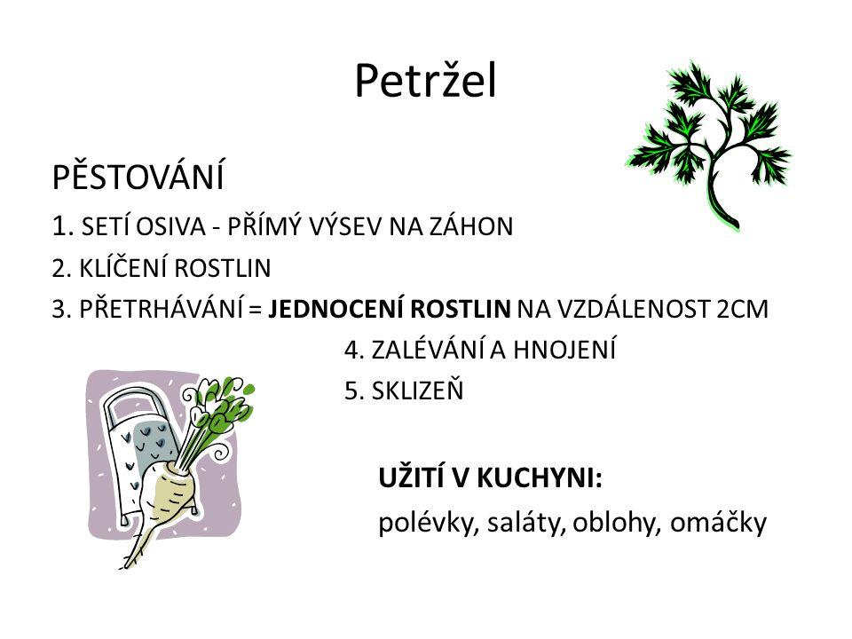 Petržel PĚSTOVÁNÍ 1. SETÍ OSIVA - PŘÍMÝ VÝSEV NA ZÁHON 2.