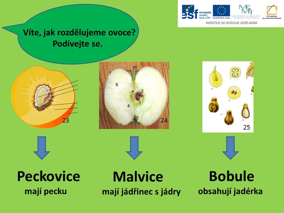 Peckovice mají pecku Malvice mají jádřinec s jádry Bobule obsahují jadérka 2324 25 Víte, jak rozdělujeme ovoce.