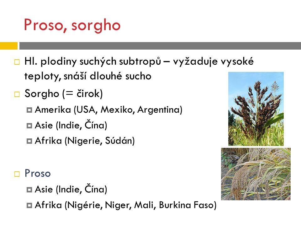 Proso, sorgho  Hl. plodiny suchých subtropů – vyžaduje vysoké teploty, snáší dlouhé sucho  Sorgho (= čirok)  Amerika (USA, Mexiko, Argentina)  Asi