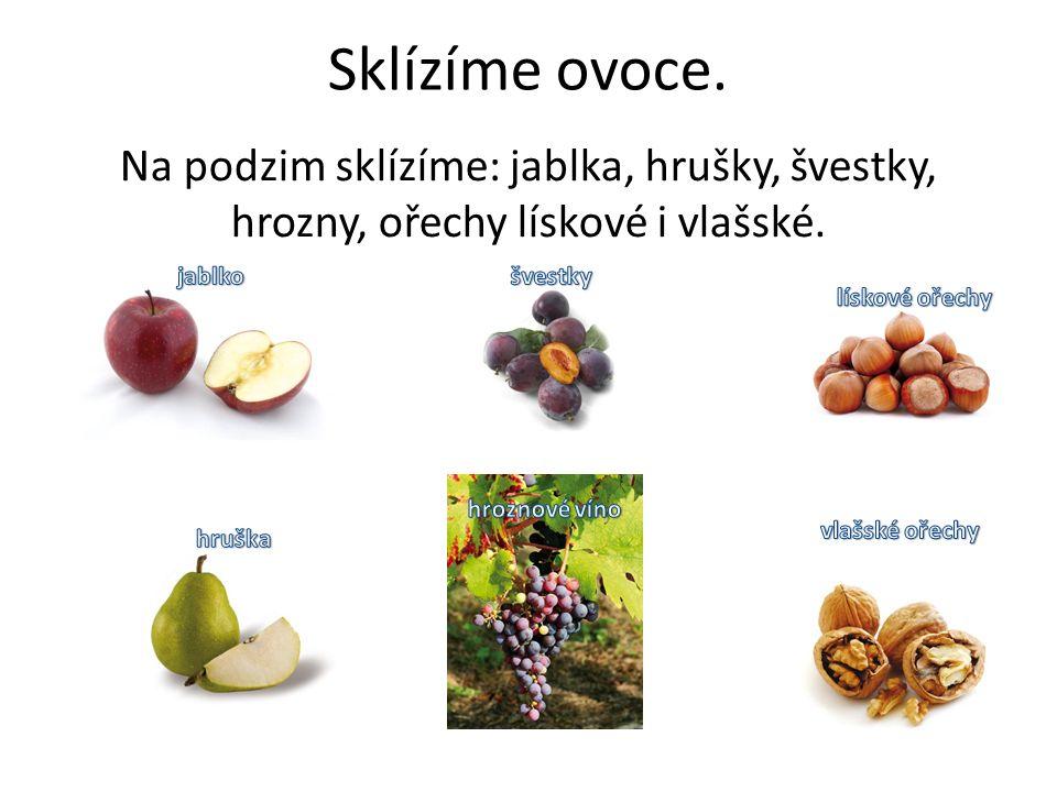 Sklízíme ovoce. Na podzim sklízíme: jablka, hrušky, švestky, hrozny, ořechy lískové i vlašské.