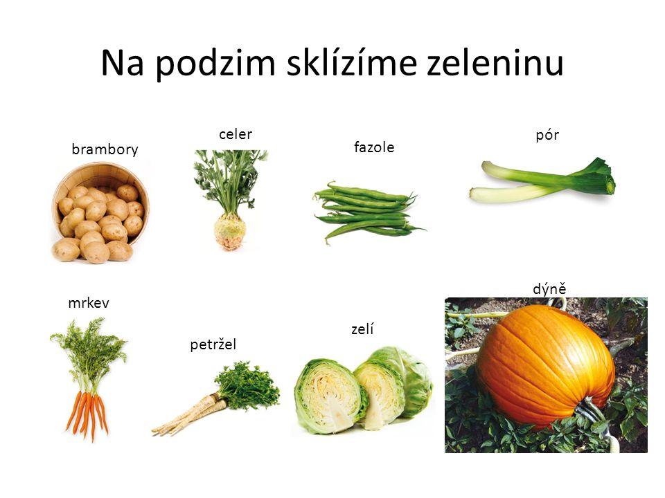 Uchovávání zeleniny.