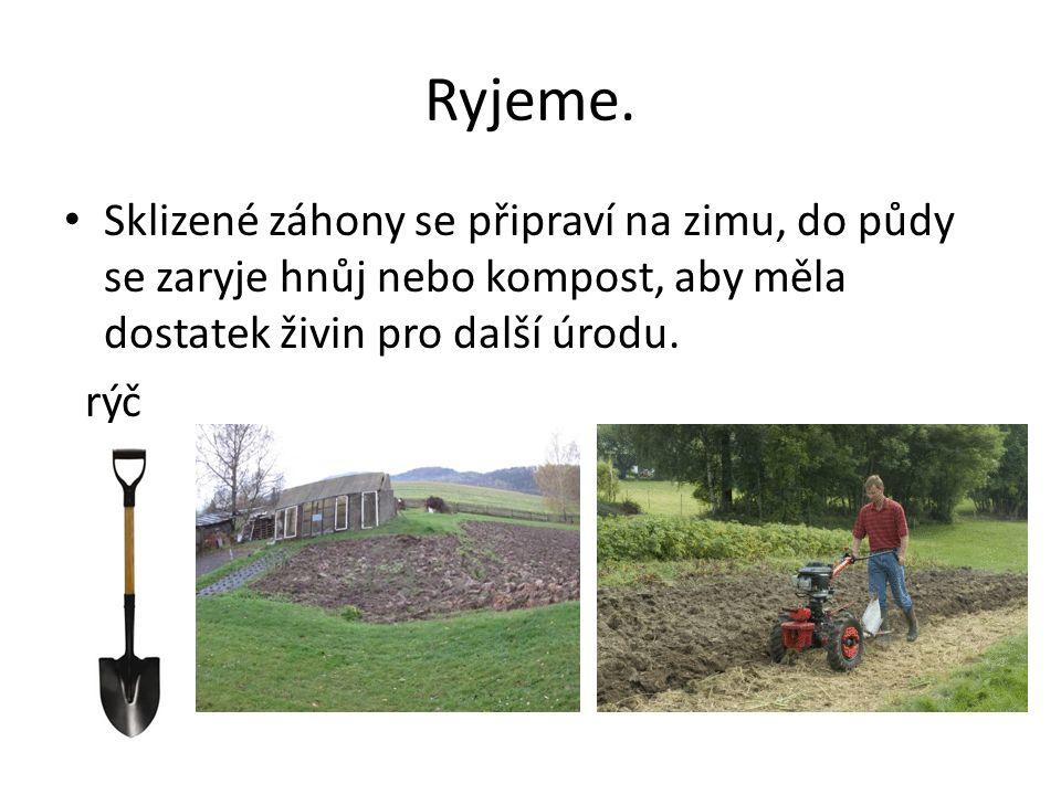 Ryjeme. Sklizené záhony se připraví na zimu, do půdy se zaryje hnůj nebo kompost, aby měla dostatek živin pro další úrodu. rýč