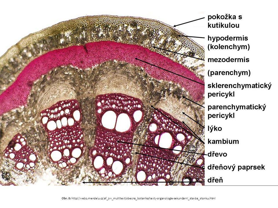 Obr. 8: http://web2.mendelu.cz/af_211_multitext/obecna_botanika/texty-organologie-sekundarni_stavba_stonku.html