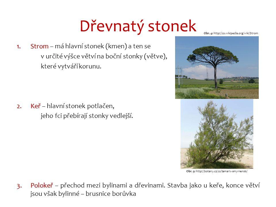 Dřevnatý stonek 1.Strom 1.Strom – má hlavní stonek (kmen) a ten se v určité výšce větví na boční stonky (větve), které vytváří korunu.