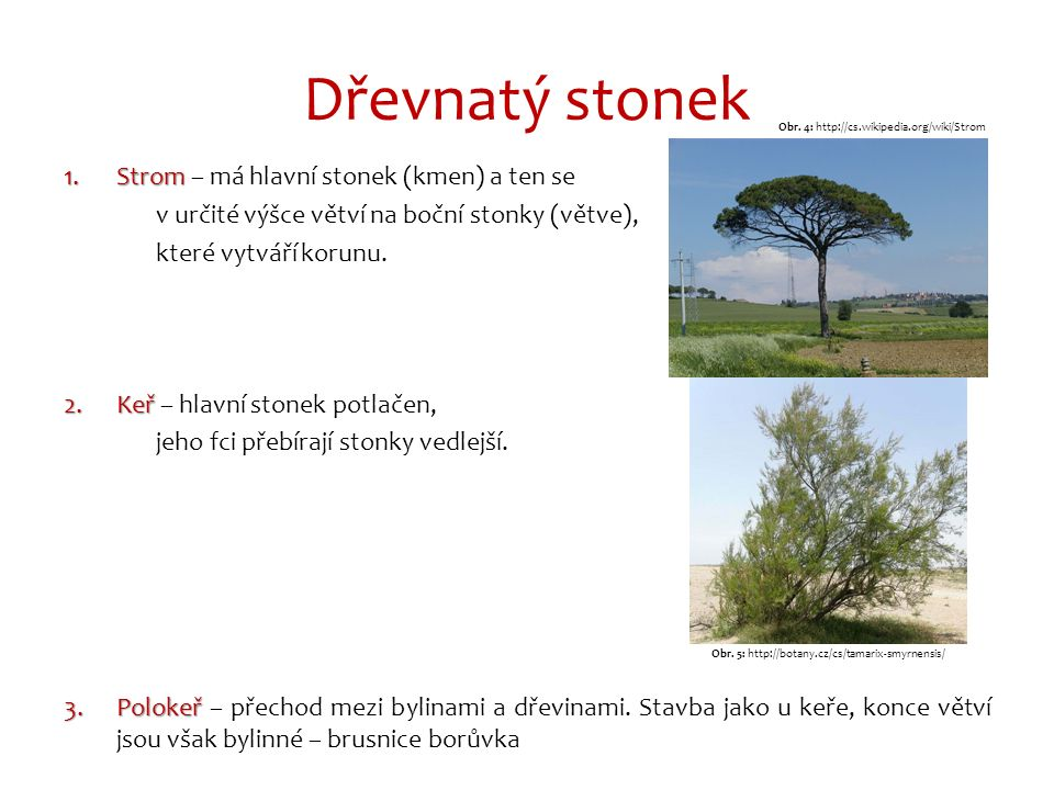 Způsob růstu stonku Obr. 6: http://biomach.wz.cz/botanika_organy.htm