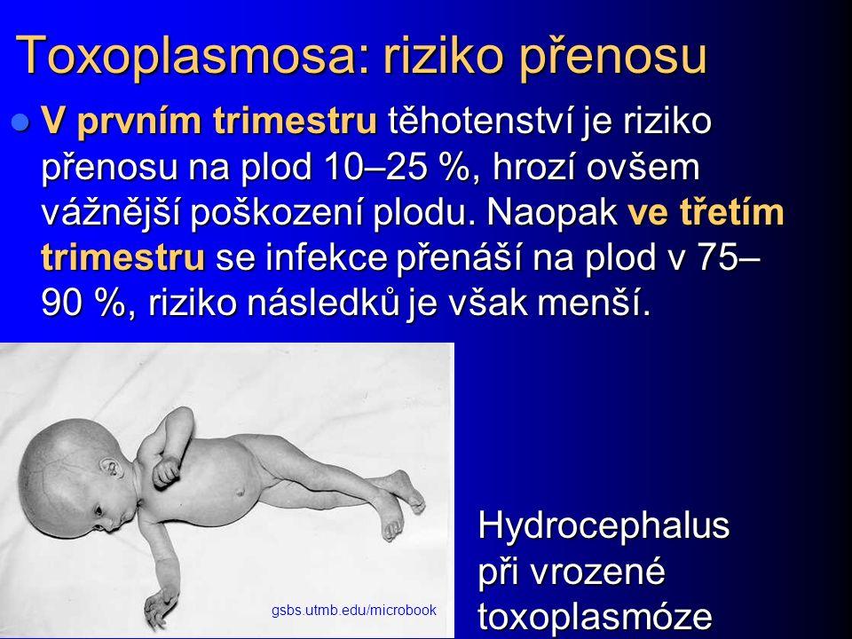 Toxoplasmosa: riziko přenosu V prvním trimestru těhotenství je riziko přenosu na plod 10–25 %, hrozí ovšem vážnější poškození plodu.
