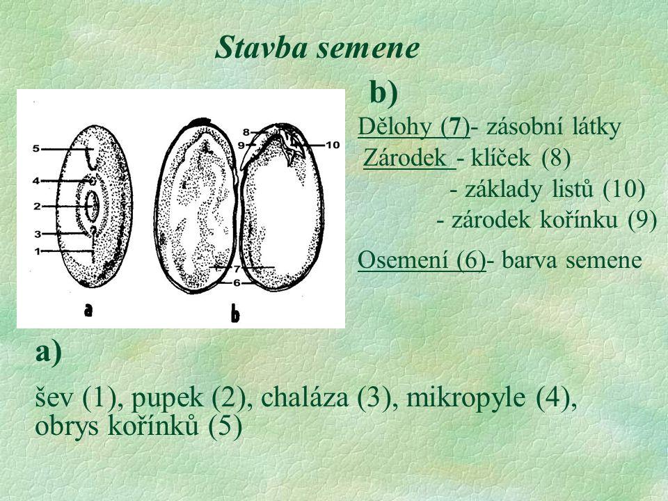 Stavba semene Dělohy (7)- zásobní látky Zárodek - klíček (8) - základy listů (10) - zárodek kořínku (9) Osemení (6)- barva semene b) a) šev (1), pupek